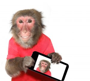 Don't Be the Monkey's Uncle: Complete Your Investigation